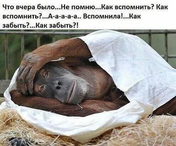 http://s7.uplds.ru/t/qfySc.jpg